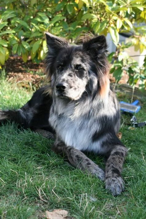 7 Cool Breeds Of Dogs by Cool Breed Mixes
