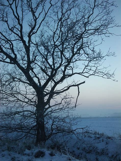 winter tree frozen winter tree by hokota on deviantart