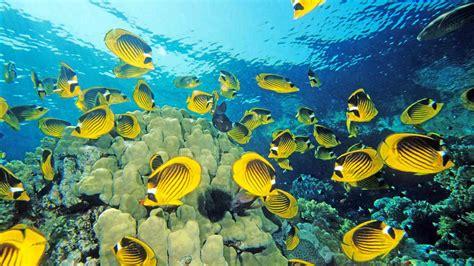 free wallpaper under the sea yellow fish under sea desktop wallpaper dreamlovewallpapers