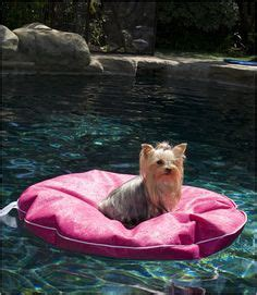 pool rafts for dogs pool on pool floats above ground pool and pool toys