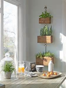 kitchen herbs 17 best images about herbs and vegetables grow them inside on pinterest gardens planters