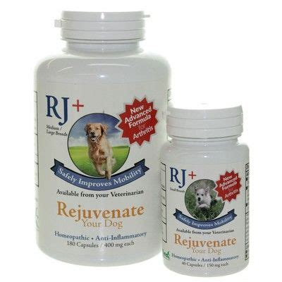 creatine for dogs rejuvenate plus creatine supplement for dogs vetrxdirect