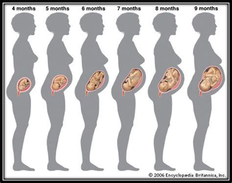 gambar foto perkembangan janin 6 bulan janin umur 4 bulan newhairstylesformen2014 com