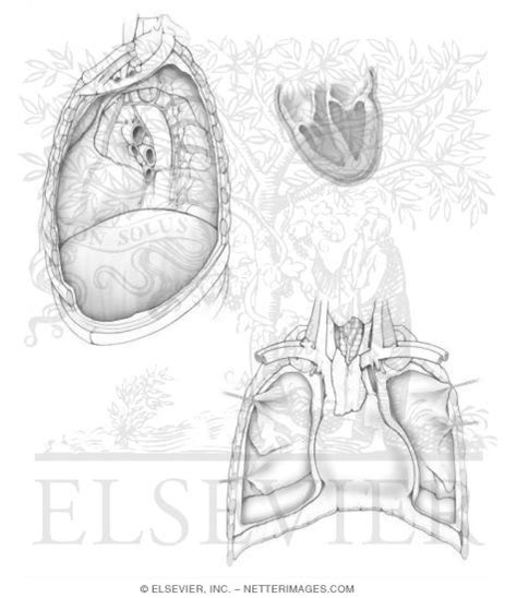 anatomy coloring book pdf netter illustrations in anatomy coloring book hansen 1e