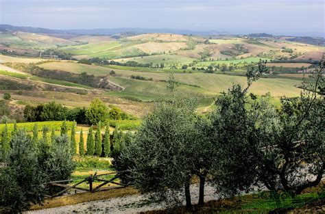 Search Itsly Vineyards Tuscany Italy Images Search