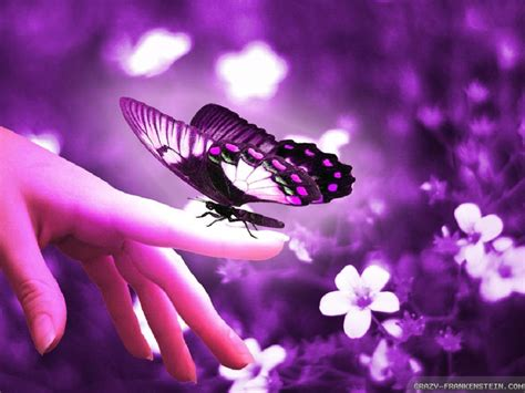 and butterfly beautiful butterflies and flowers wallpapers wallpapersafari