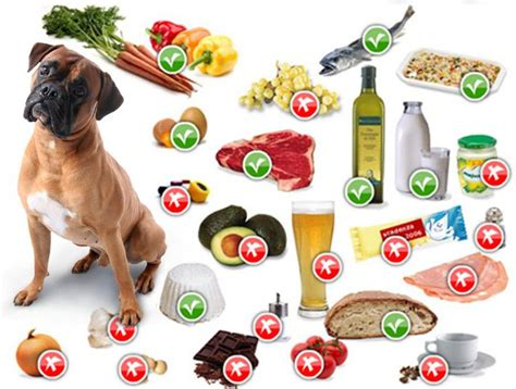 alimenti per cani alimentazione lista di cibi pericolosi e alimenti da