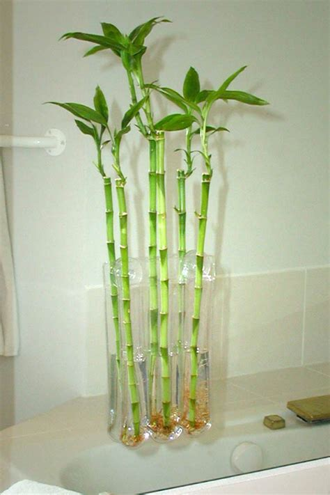 bamboo plant in bathroom large three blossom window vase