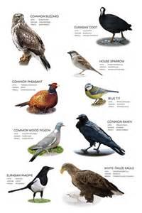 birds akuart gallery
