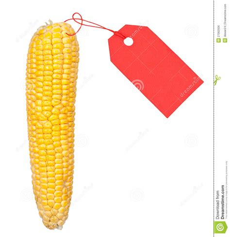 ripe ear of corn with a red price tag royalty free stock