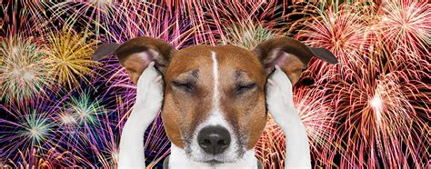 dogs and fireworks fireworks biscuits bath