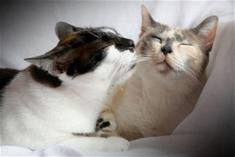 introducing   cat   family tips  tricks