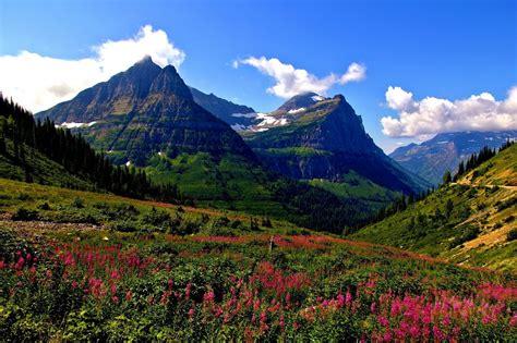 montana glacier flower mountain meadow hd wallpaper