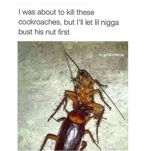 cockroach memes memedroid