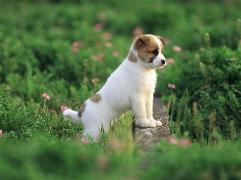 puppies indiana pretty in garden puppies wallpaper 13904300 fanpop