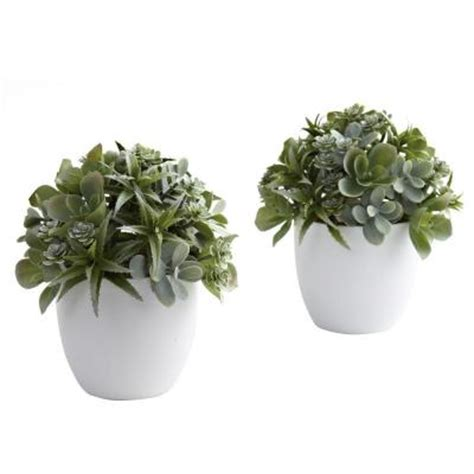 white succulent planter nearly natural mixed succulent with white planter set of