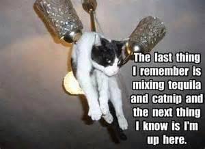 Drunk Cat Meme - drunk cat jokes memes pictures