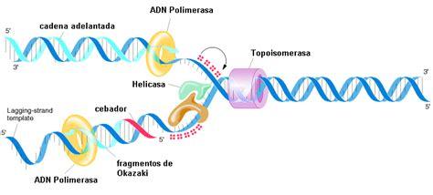 cadena de adn de 15 nucleotidos mariiel fashionn marzo 2012