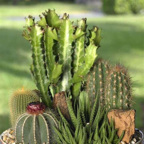 Good Cactus Garden Ideas #1: 1452974544379.jpeg