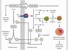 Gamma-glutamyl transferase and cardiovascular disease ... Gamma Glutamyl Transferase