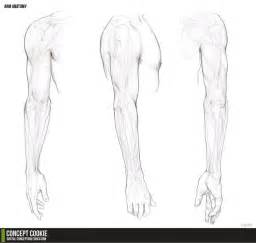 arm template human arm reference sketch coloring page
