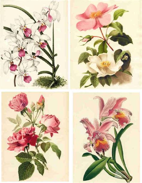 Decoupage Flowers - vintage animal illustrations decoupage paper collage