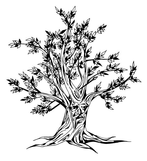 ash leaf coloring page ash tree silhouette sketch coloring page