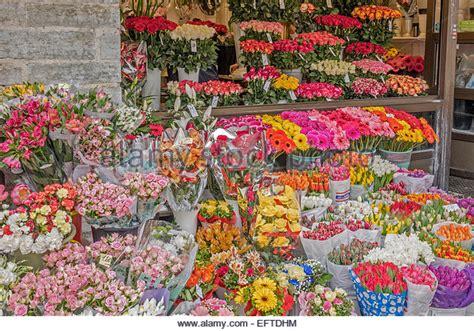 Esmonia Lopperio Flower tallinn flower stock photos tallinn flower stock images alamy