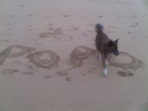 popo  jablay dog home facebook