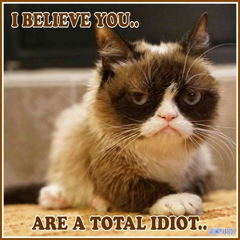 A Total Idiot by Another Grumpy Cat Meme By The Other Grumpy 2017 You