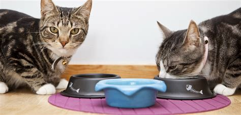 what happens if a eats cat food how to help your cats get along