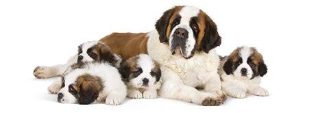 imagenes niños diferentes razas enciclopedia de razas de perro aprend 233 sobre diferentes