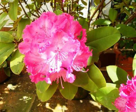 imagenes flores invierno flores en invierno fotos de plantas y flores