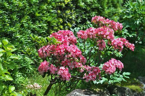 top 28 zone 8 shrubs flowering evergreen vines zone 5