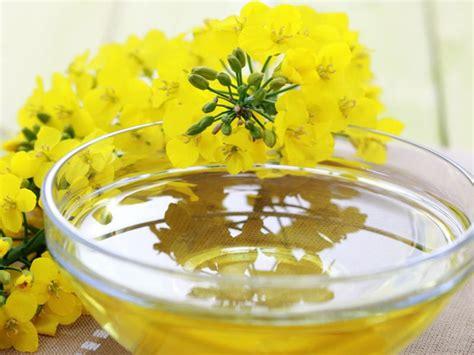 olio di colza alimentare l olio di colza fa controindicazioni e dove si trova