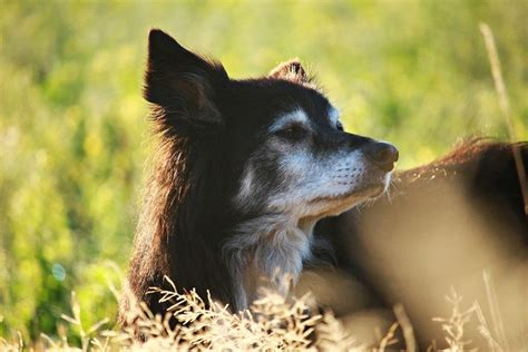 fecal incontinence in dogs 9 senior incontinence products solutions tips for elder care