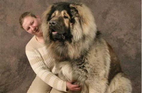 The Furniture House by 16 Dogs Who Are Bigger Than Their Owners The Barkpost