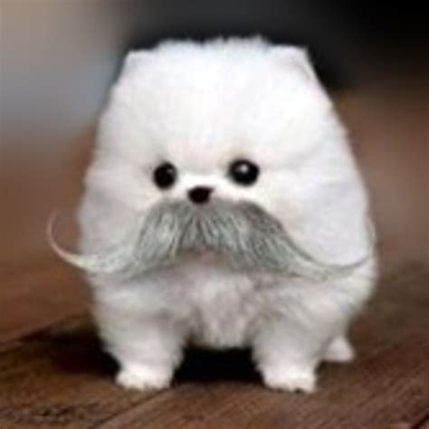 puppy with mustache mustache really