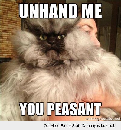 Funny Angry Cat Meme - unhand me cat meme cat planet cat planet