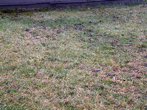 lawn earth worm increase with biovam mycorrhiza present