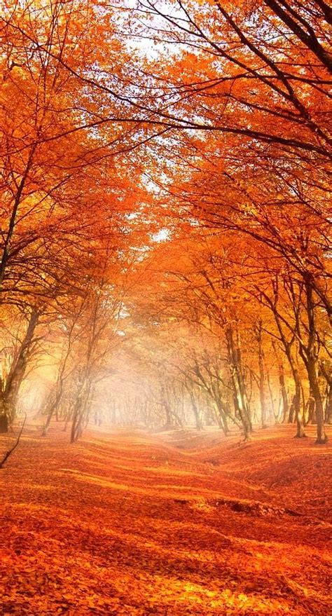 color trees 25 unique fall trees photography ideas on