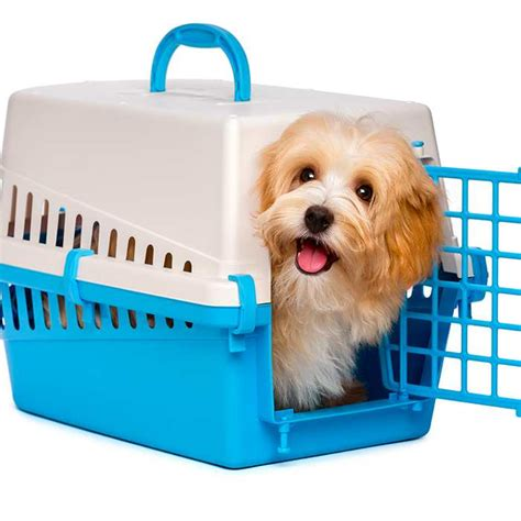 crate training a puppy with another dog in the house crate training your puppy bow wow meow pet insurance