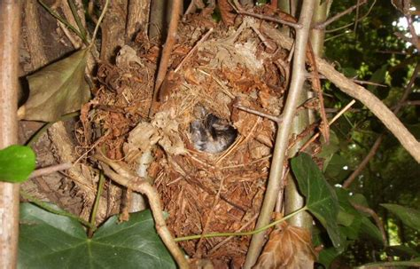 wren s nest