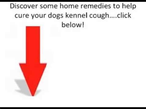 yorkie hacking cough what kennel cough sounds like funnycat tv
