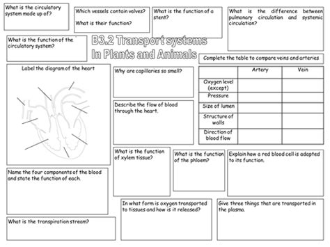 plant hormones worksheet aqa gcse b3 2 transport in plants and animals by