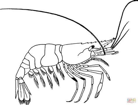 shrimp color shrimp coloring pages print coloring