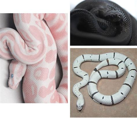 color pattern of poisonous snakes 64 best images about snakes of many colors on pinterest