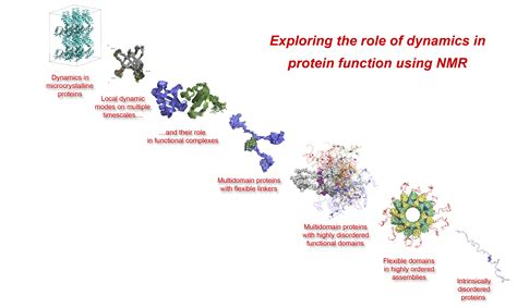 protein nmr protein dynamics and flexibility by nmr ibs