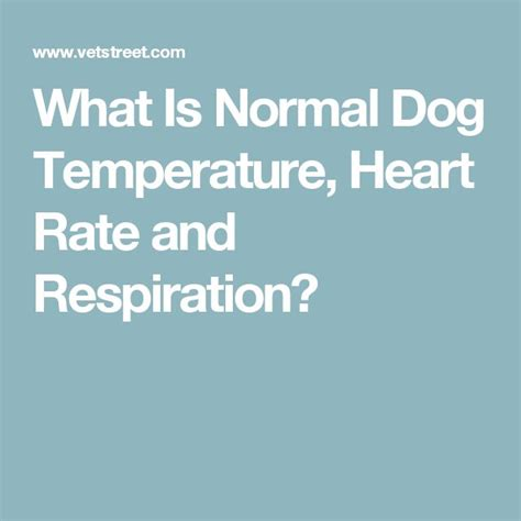 normal rate for dogs best 25 temperature ideas on heat in heat and buy fridge freezer