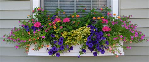 flowers for planters shapes and forms of flowers for window boxes